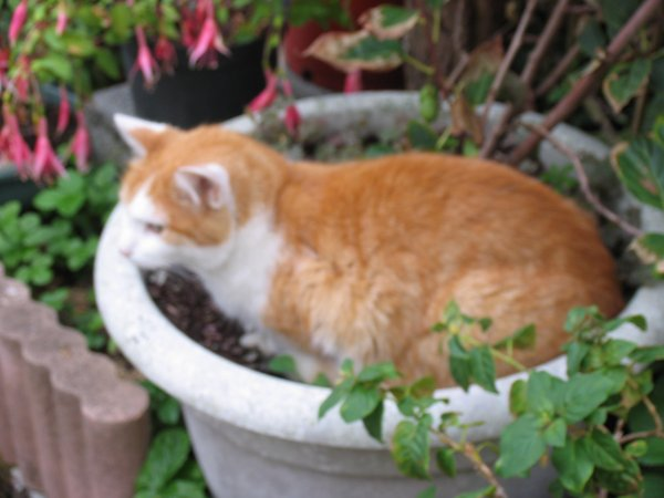Sortie au jardin, Slouby au jardin