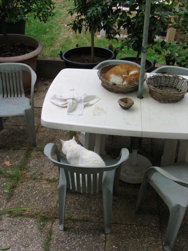 On ne mangera pas dehors :(