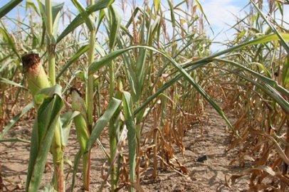 L'Amérique du Sud en proie à une importante sécheresse.