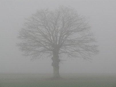 Pour cette Semaine, fraîcheur marquée et averses.
