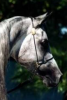 Beautyful-horse