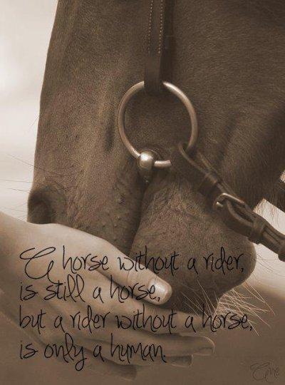 """"""" L'extérieur du cheval exerce une influence bénéfique sur l'intérieur de l'homme"""""""