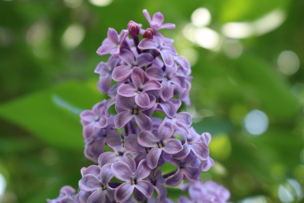 🌸 Flowers 🌺 #2