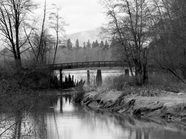 Kanaka Creek Area Maple Ridge BC