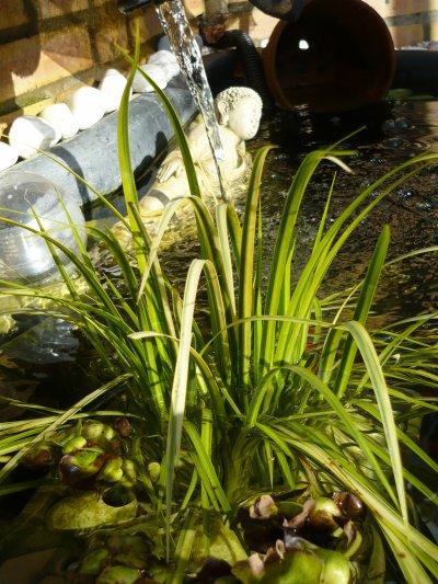 plante bassin