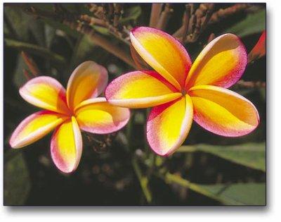 une fleur magnifique