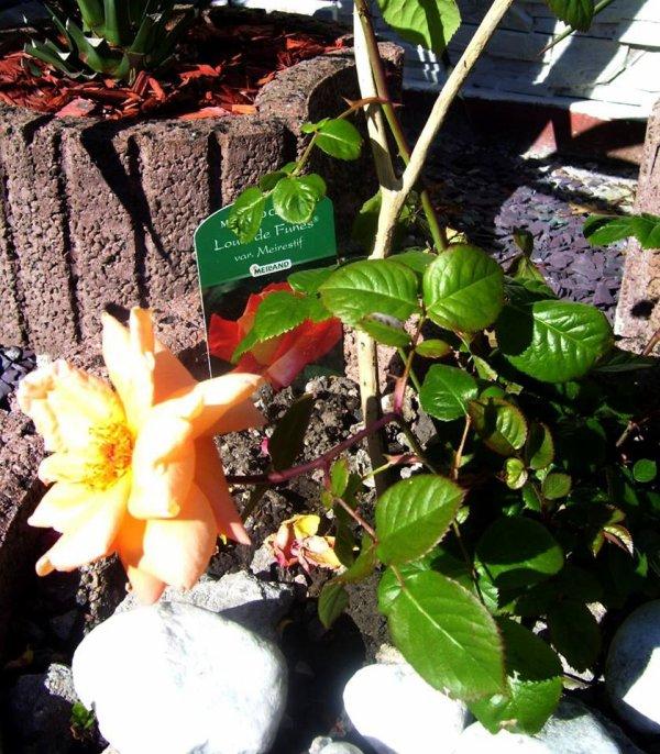 rose  louis de funes