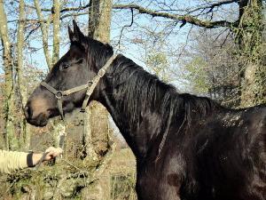 """Regarde un cavalier sans son cheval, il lui manque la moitié de son sang."""