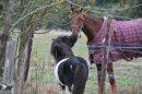 Photo de chevaux-horse95