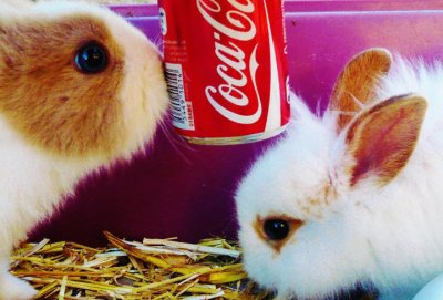 Puub Coca-Cola ! ;)