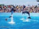 Photo de dauphins172