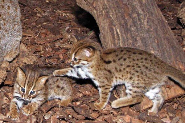 chat en ligne datant de l'Inde meilleurs sites de rencontres au Pérou