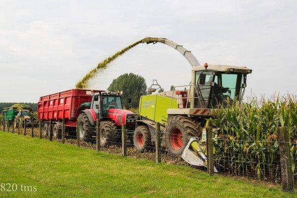 Maïs 2013 chantier n°4