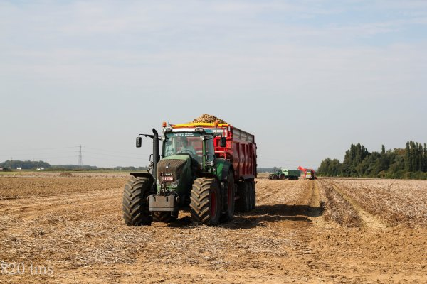 arrachage de pommes de terre 2013 chantier n°6
