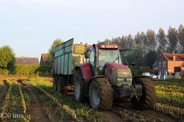 Maïs 2013 chantier n°9