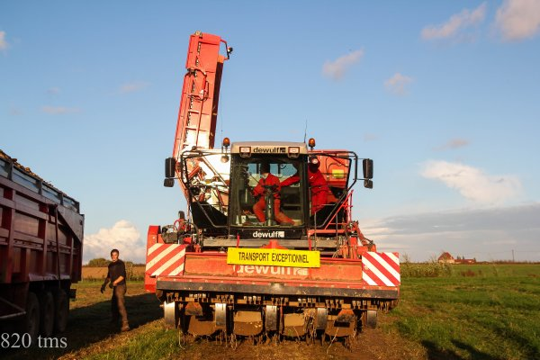 arrachage de pommes de terre 2013 chantier n°7