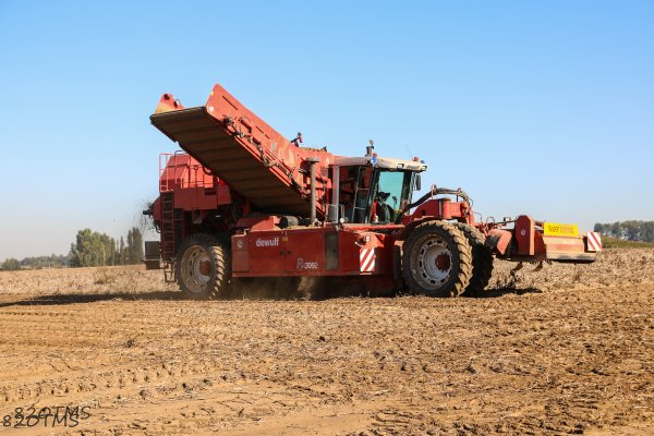 Arrachage de pommes de terre 2015
