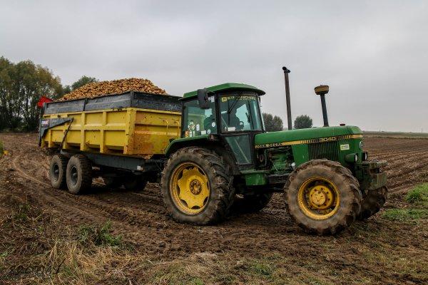 Arrachage de pommes de terre 2016