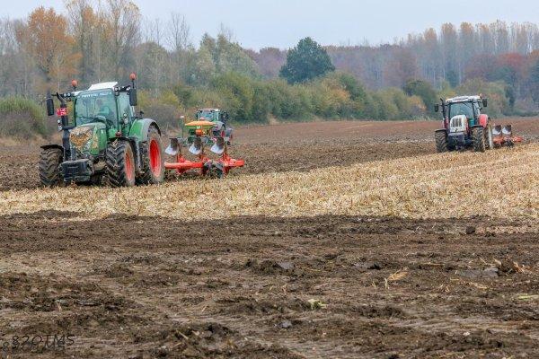 Semis de blé à l'automne dernier