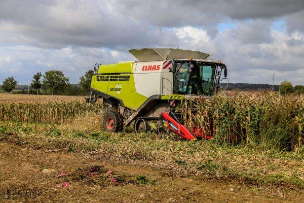 Maïs grain 2017
