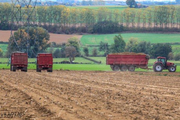Arrachage de pommes de terre 2017