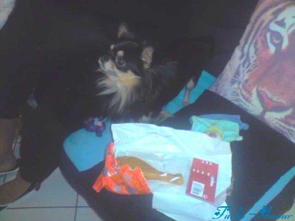 Fuchs Avec Son Cadeau De Noël ♥
