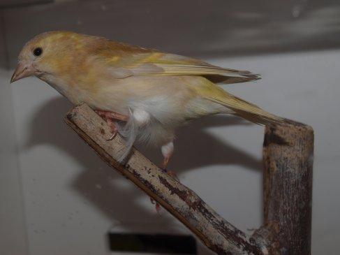 f tarin des aulnes mutation pastel pour 2012