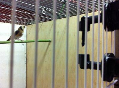 El nuevo aviario
