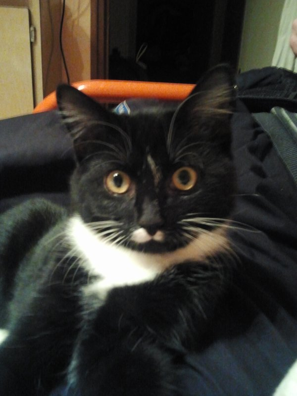 mon chat garfilde