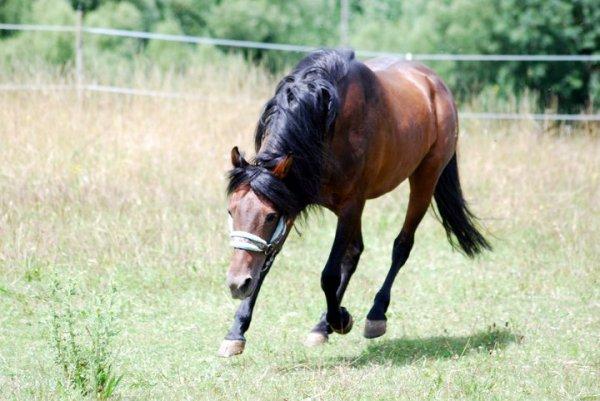 photos de quelques chevaux de mon club...