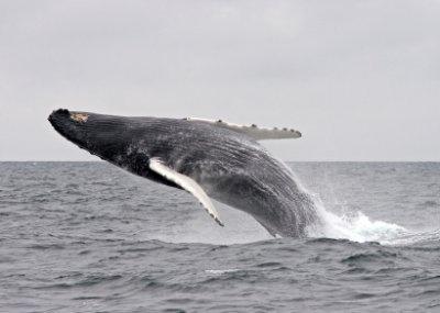 une baleine sur boulogne sur mer