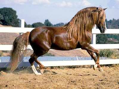 super cheval serieux