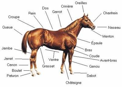 mieux connaitre le cheval