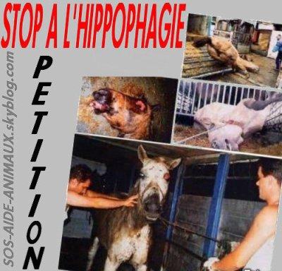 stop a l'hippophage