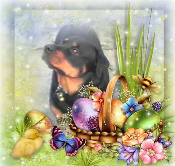 Joyeuses Pâques, ma belle