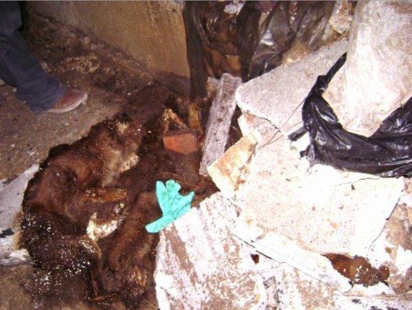 Renard mort et poubelle au fond d'un puits