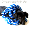 DreamlessAnimals