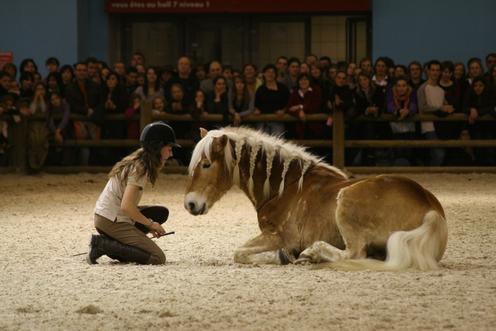 """Résultat de recherche d'images pour """"ethologie salon du cheval"""""""