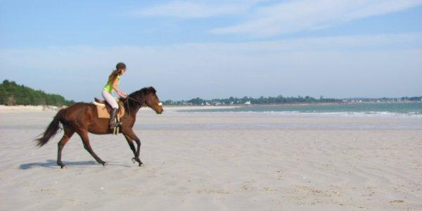1ère séance montée à la plage avec Pirouette - photos