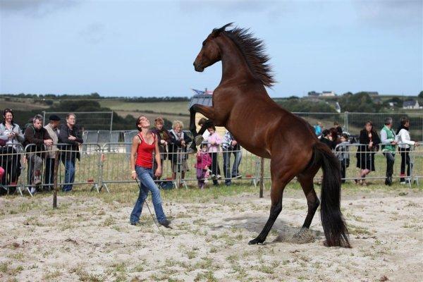 Démo au festival country des RedNecks Breizh