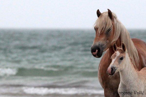 1ère plage...le film !! :) - juin 2012