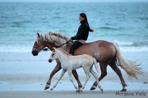 Mes Naïs..... Au pré + A la plage !!! :D - juin 2012