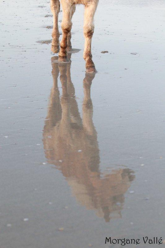Naïade et Sinaï à la Torche - décembre 2012