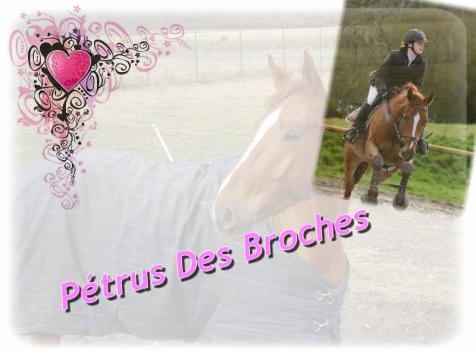 PETRUS DES BR0CHES *