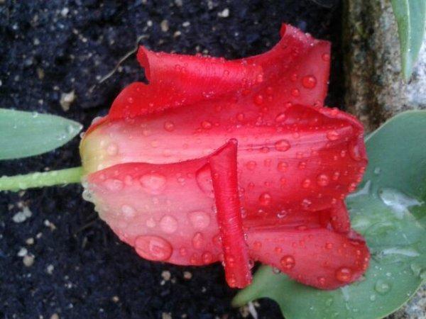 Pluie et fleurs