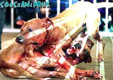 Le combat d'animaux