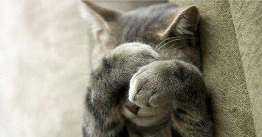 Le chaton ^^