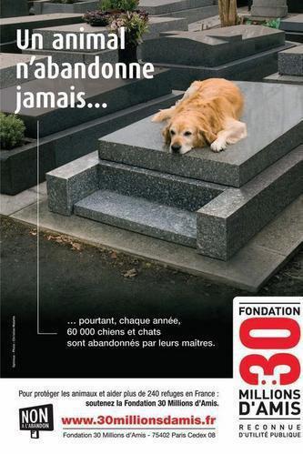Respectez vos chiens