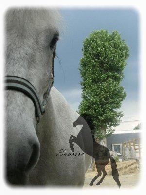 Il n'y a pas de secrets aussi intimes que ceux du cavalier et de son cheval.