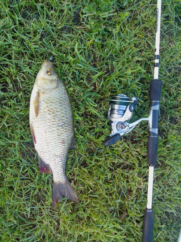 Froid et fish